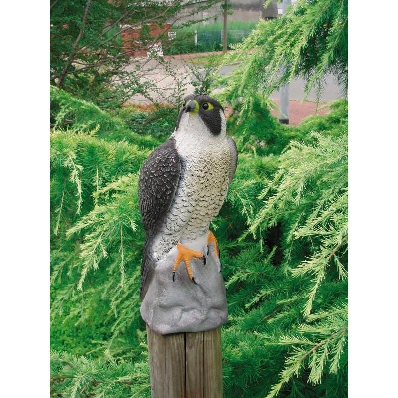 Faucon - Hauteur : 40 cm