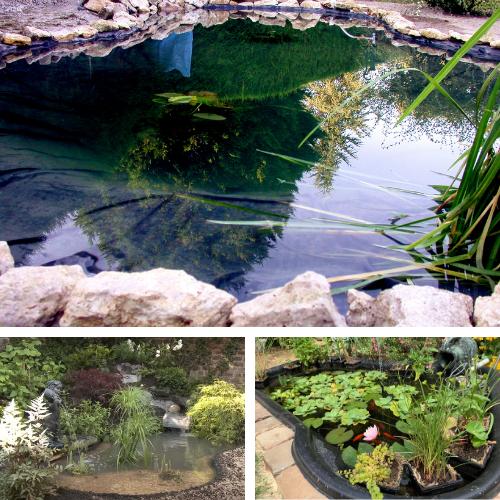 créer son bassin de jardin