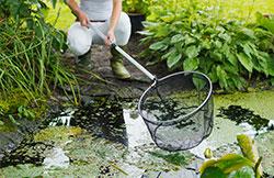 Nettoyage du bassin