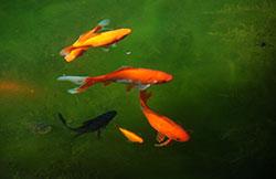 Soins pour poissons